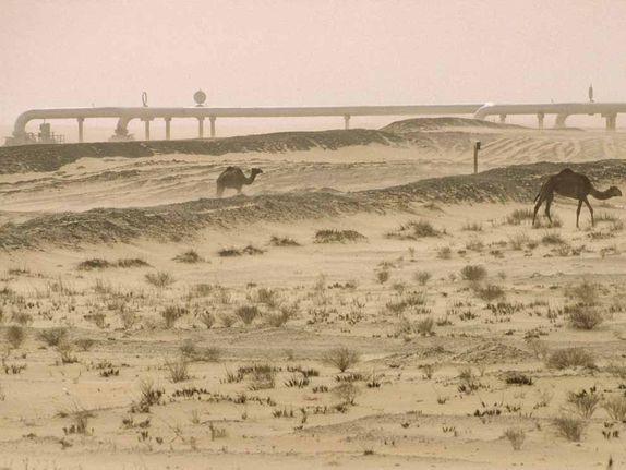 Saudi Arabia nỗ lực 'thổi màu xanh vào cát'
